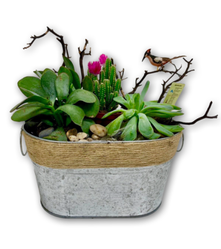 Succulent  Garden in Tin Container