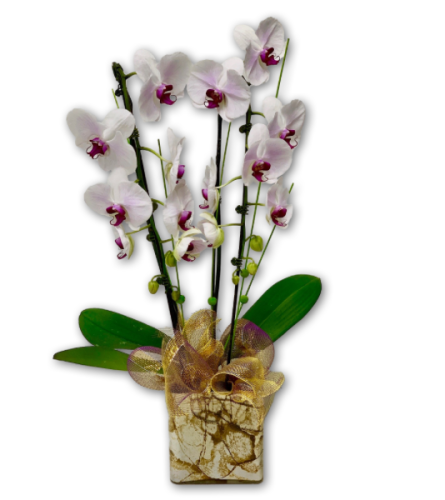 Fragrant WinterBerry Orchids in Marbled Vase