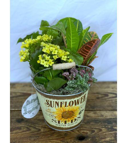 """Fall Planter in """"Sunflower Seeds"""" Tin Pot"""