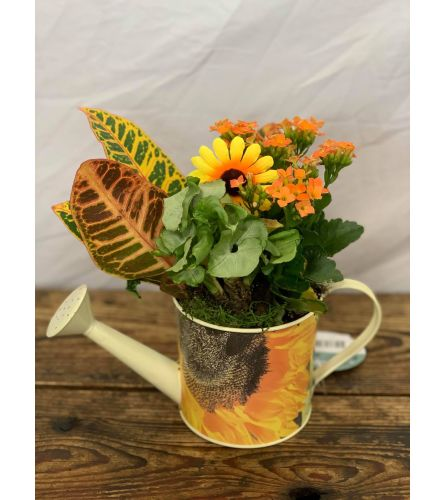 Watering Can Planter for Fall