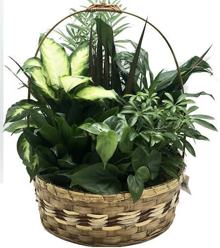 Garden Basket 2020