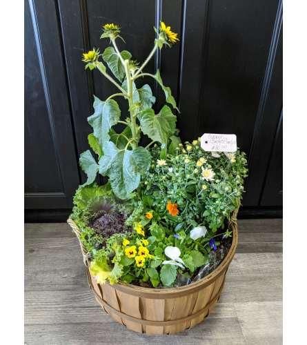 Designer Mix Outdoor Planter