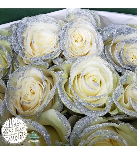 Amazing Roses One  Dozen Silver Glitter
