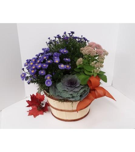 Autumn Aster Basket