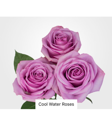 Lovely Lavender Rose Bouquet