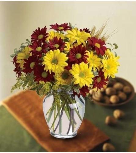 Fall Daisy Special