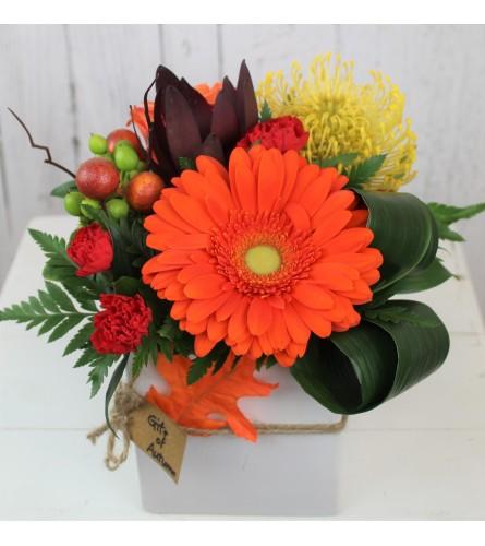 Gift of Autumn