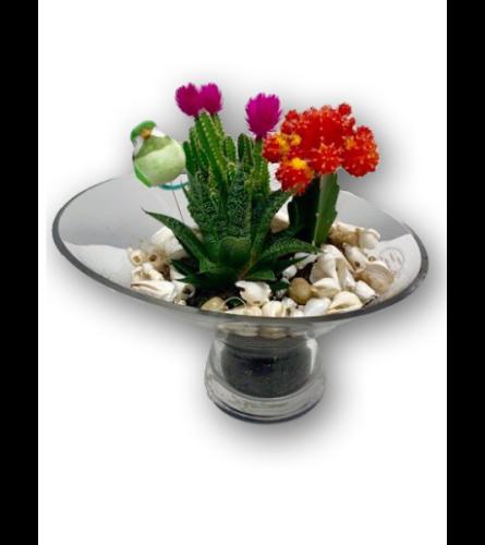Rustic Cacti in Dish Garden