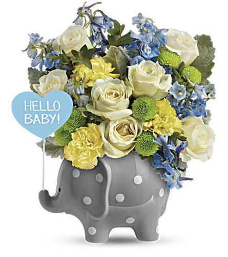 Sweet Baby Boy Elephant