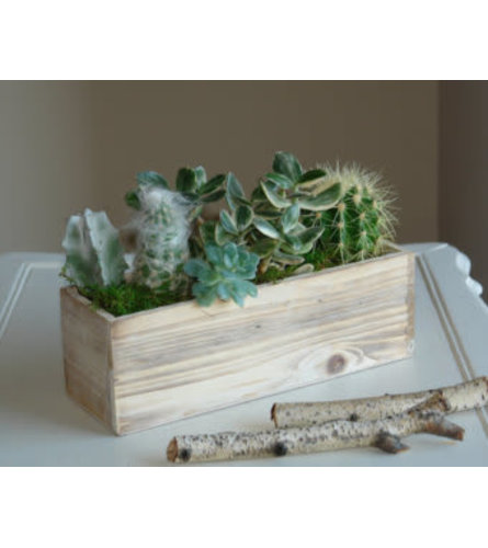 Succulents in Barnwood