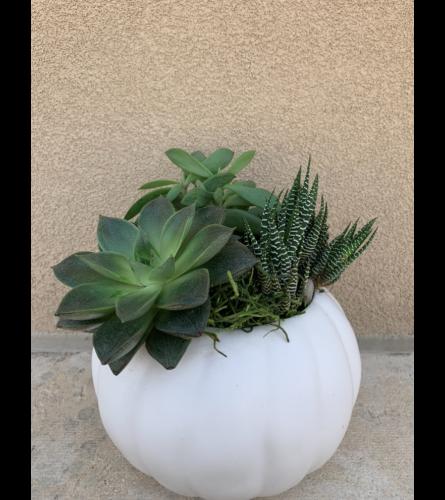 Happy Succulent Garden