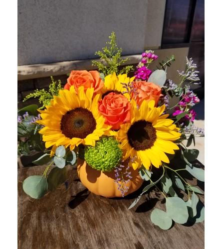 The Sunny California Pumpkin