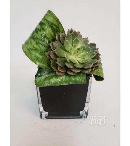 Simply Organic Succulent