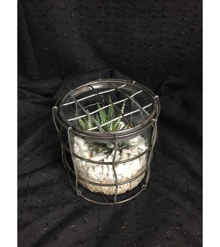 Succulent Cage