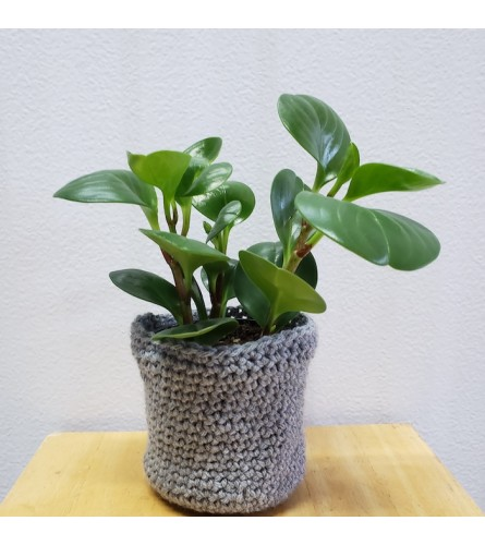 "Sweater Weather 4"" Green Plant"