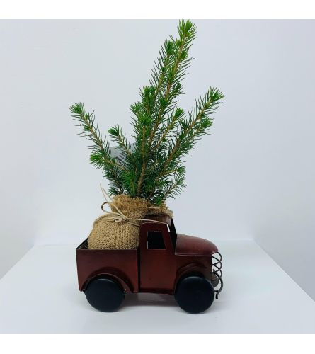 Evergreen Tree Pickup Truck - Small