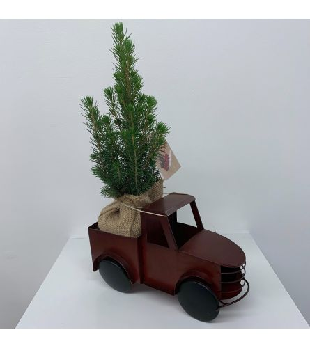 Christmas Tree Pickup Truck - Medium
