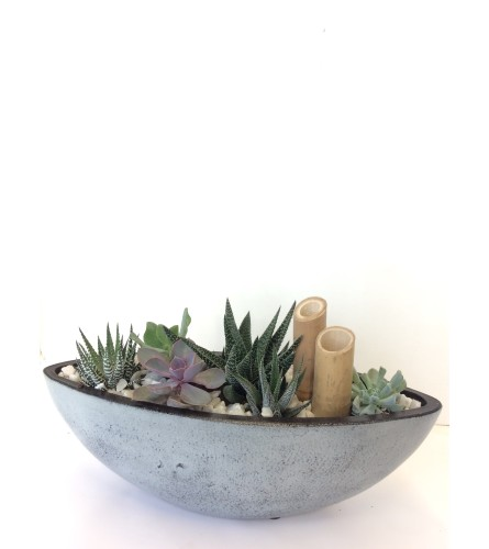 New Age Modern Succulent Dish Garden