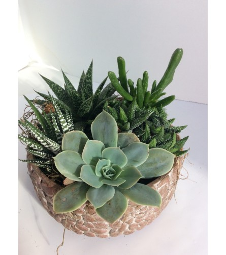 Stone Mosaic bowl of Succulents