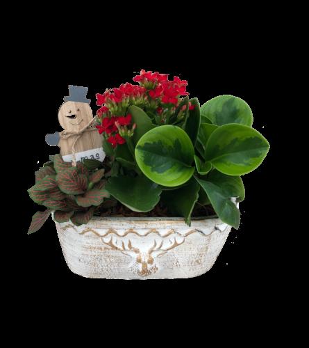 Christmas Oval Planter