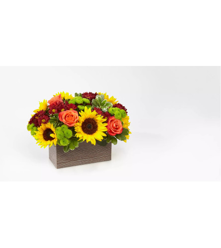 Sunflower Harvest Garden