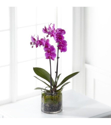 Pink/Purple Orchid Planter