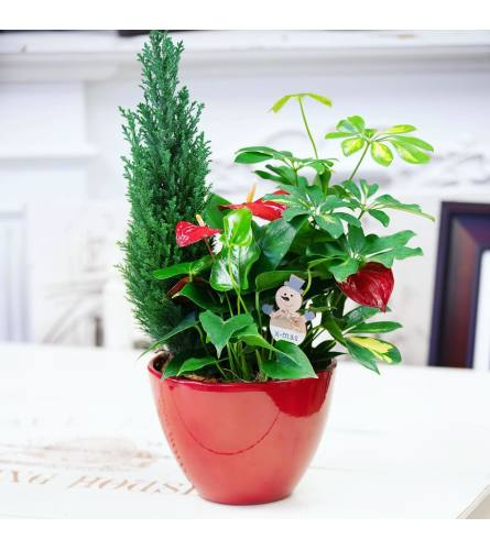 Planter for the Holidays