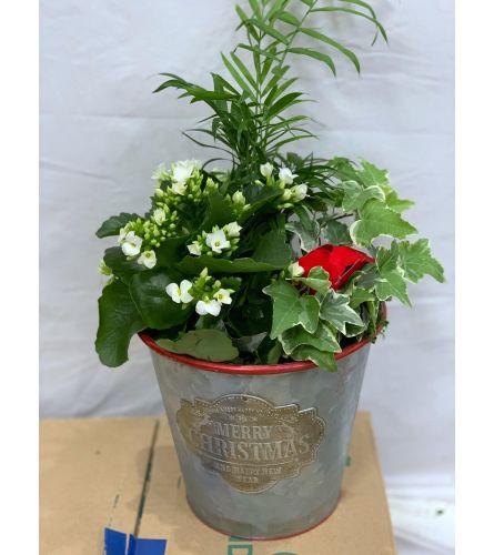 Christmas Carol Planter - Medium