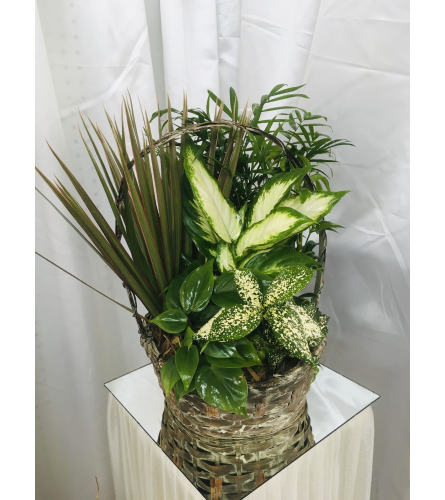Basket of tropical plants