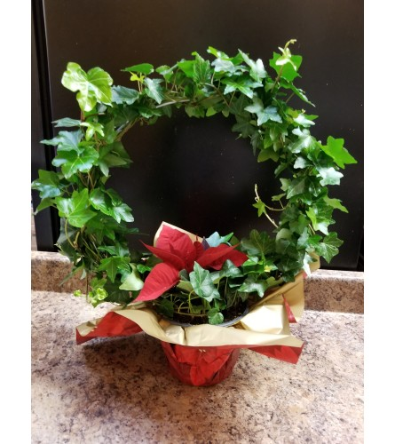 Ivy Hoop with Poinsettia plant