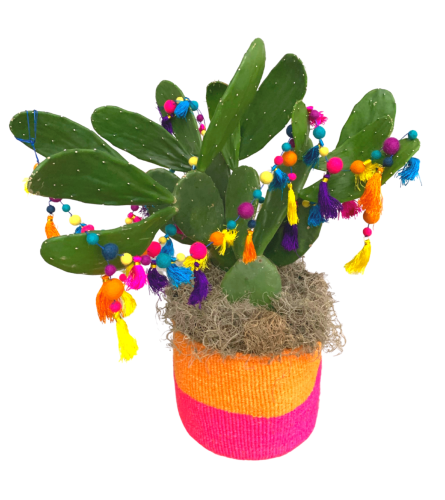 Festive Holiday Cactus with Colorful Garland