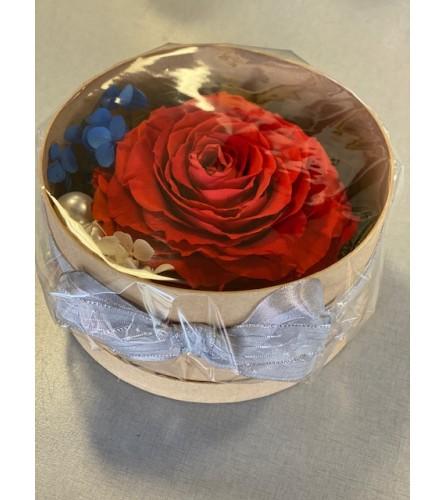 Forever life Rose