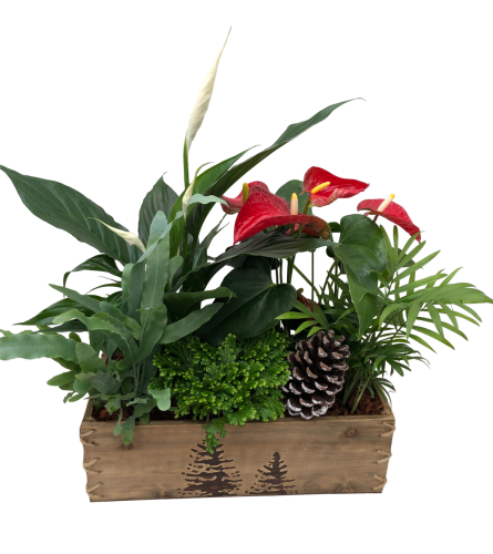 The Christmas Box Planter, Tropical