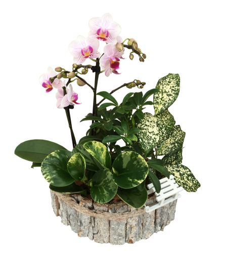 Orchid Birch planter