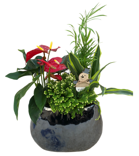 Glossy Anthurium and Frosty Fern Planter, Pewter