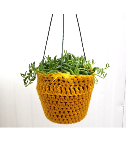 "Sweater Weather 6"" Hanging Succulent"