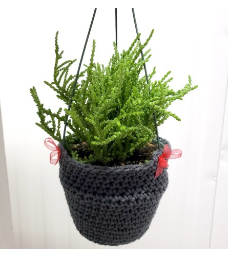 "Sweater Weather 6"" Hanging Green Plant"