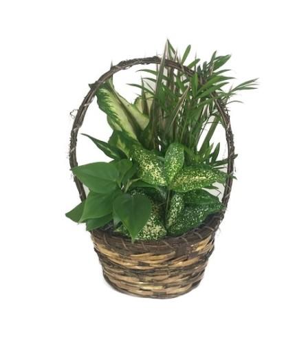 Live Foliage Basket