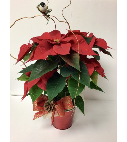 Single Poinsettia Plant Decorated