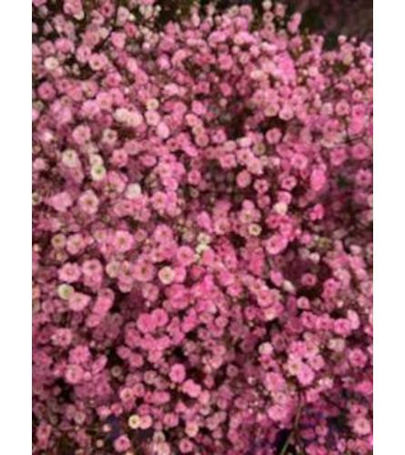 2 Bunches Pink tinted Baby's Breath
