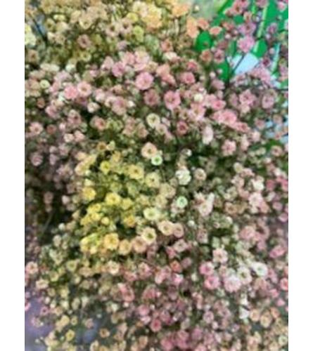 2 Bunches Pastel Tinted Baby's Breath