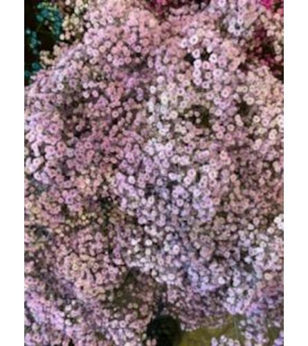 2 Bunches Lavender Tinted Baby's Breath