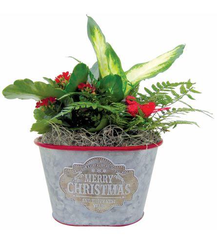 Christmas Carol Garden