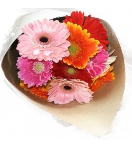 1 Dozen mixed Gerber daisy's loose wrapped bouquet