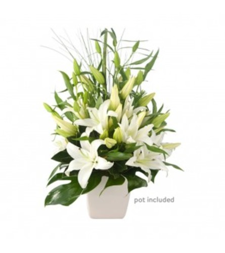 WHITE LILYS ARRANGED IN A FLOWER POT