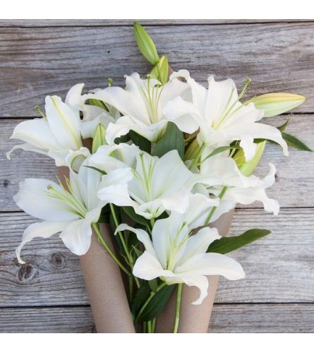 LILIES WRAPPED