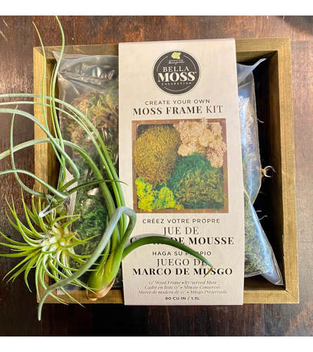 DIY Moss Planter kit with air plants