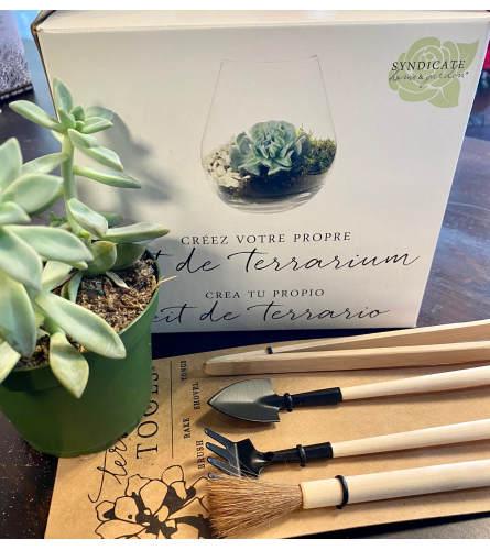 DIY Terrarium, tools and succulent