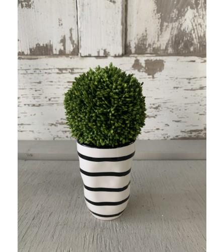 Moss Ball Vase
