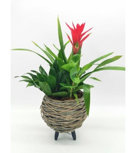 Pedestal Bromeliad Planter
